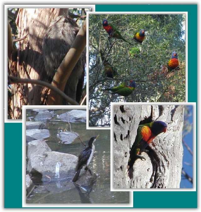 bird count montage