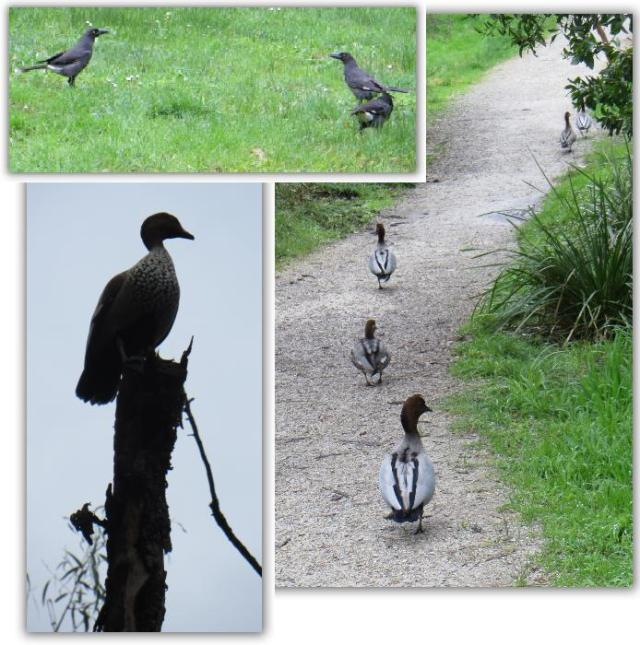 birds201307