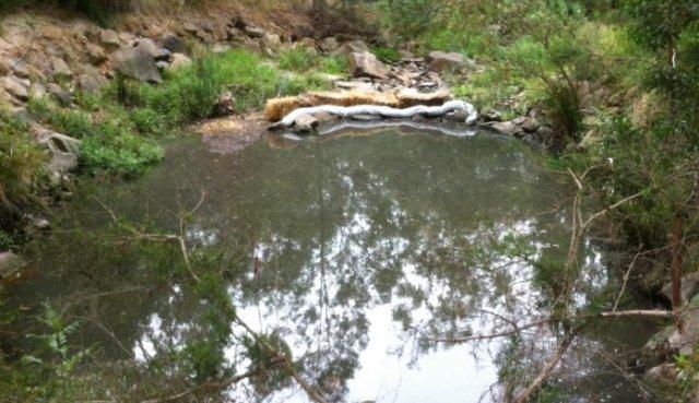 laurel grove sewage pollution
