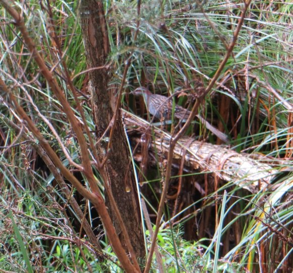 rail_waratah_wetlands