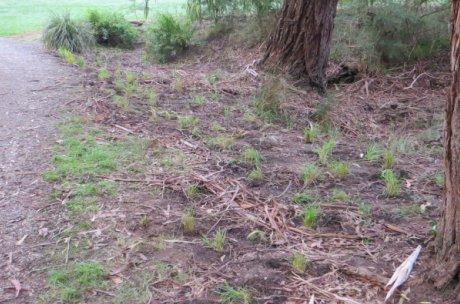 billabong plantings