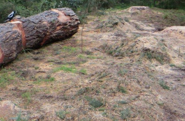 pines Kalang park