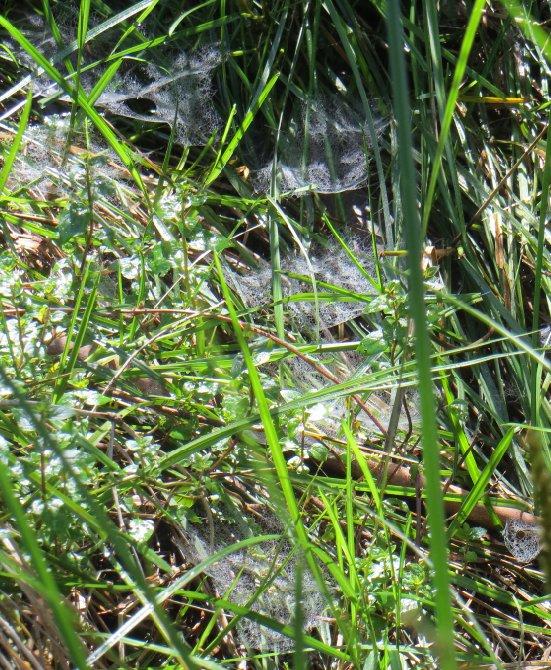 webs at frog bog