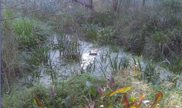 Waratah Wetlands - March, 2015