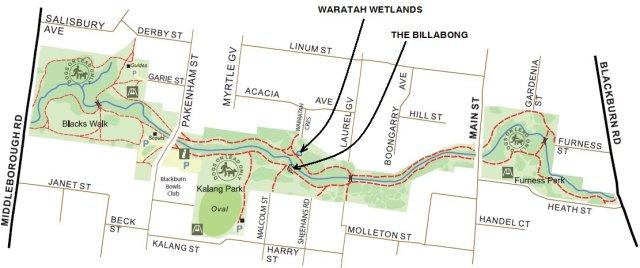 Waratah Wetlands and The Billabong