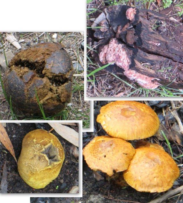 fungi3