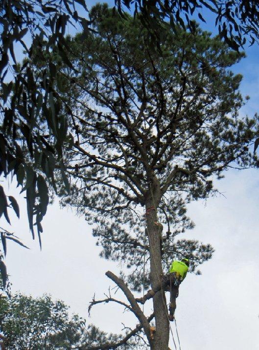 pines-kalang-park-3